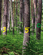FORESTRY AND SPORTS MARKING